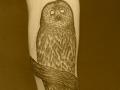 arctic-owl-tattoo-design