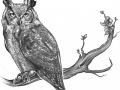 best-owl-tattoo-idea-drawing