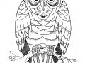 sitting-owl-tattoo