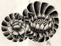 lotus_and_peony_by_willemxsm